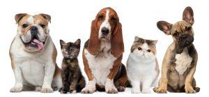cbd for pets,buy pet cbd,buy cbd oil for pets, best cbd for cats, best cbd for dogs, cbd products for pet